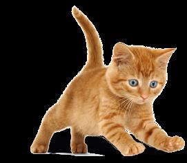 pension pour chats drome